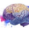 Dzień Mózgu w sopockiej SWPS